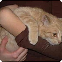 Adopt A Pet :: Milo - Bristol, RI