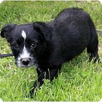 Adopt A Pet :: Bowen - Staunton, VA