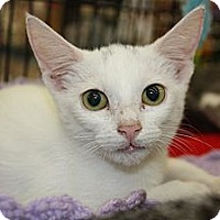 Adopt A Pet :: Angel - Vero Beach, FL