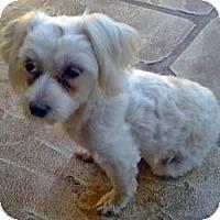 Adopt A Pet :: Angel - North Port, FL
