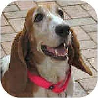 Adopt A Pet :: Henryetta - Phoenix, AZ