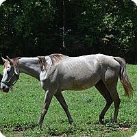 Adopt A Pet :: Ruby - Waleska, GA