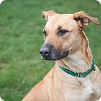 Adopt A Pet :: Debbie - Novelty, OH