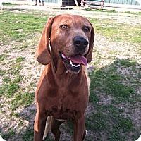Adopt A Pet :: Reese - Carey, OH