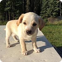 Adopt A Pet :: Tips - Saskatoon, SK