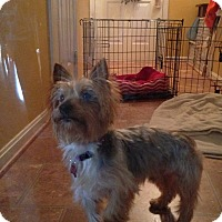 Adopt A Pet :: Tucker (courtesy listing) - Richmond, VA
