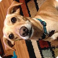 Adopt A Pet :: Marley - Marietta, GA