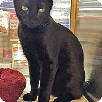 Adopt A Pet :: BeeBee - McDonough, GA