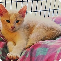 Adopt A Pet :: Meoquanee - Victor, NY