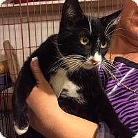 Adopt A Pet :: Tux - Studio City, CA