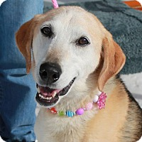 Adopt A Pet :: Missy-PENDING - Garfield Heights, OH