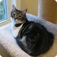 Adopt A Pet :: Gosh - Ashland, MA