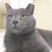 Adopt A Pet :: Oliver (PetCo Andorra) - Philadelphia, PA