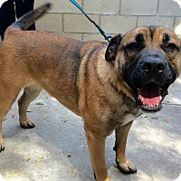 Adopt A Pet :: Gracie - Fullerton, CA