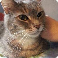 Adopt A Pet :: Cinderella - Cincinnati, OH