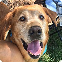 Adopt A Pet :: Zeke *Needs Foster* - Fairfax, VA