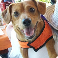 Adopt A Pet :: Alistair - Castro Valley, CA