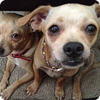 Adopt A Pet :: Lily bonded with Tulip - Las Vegas, NV