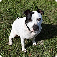 Adopt A Pet :: Jax- URGENT! Sponsored - Lisbon, OH