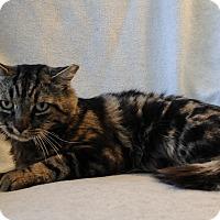 Adopt A Pet :: Linus - Wayne, NJ