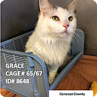 Adopt A Pet :: Grace - Flint, MI