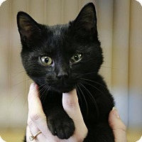 Adopt A Pet :: Squeaky Key - Kettering, OH