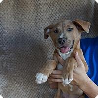 Adopt A Pet :: Abel - Oviedo, FL