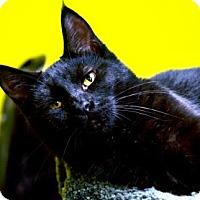 Adopt A Pet :: AJ - Fort Smith, AR