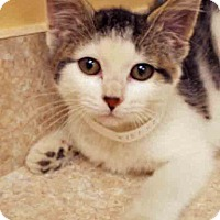 Adopt A Pet :: Fiona - Hinsdale, IL