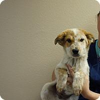 Adopt A Pet :: Zak - Oviedo, FL