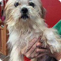 Adopt A Pet :: Stevie - Centerville, GA