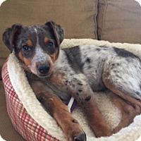 Adopt A Pet :: Sweet Pea - New Oxford, PA