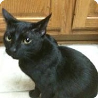 Adopt A Pet :: Ninja - Justin, TX