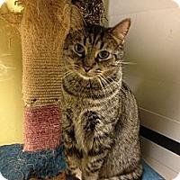 Adopt A Pet :: Jackson - Fort Lauderdale, FL