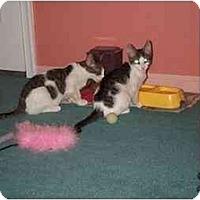 Adopt A Pet :: Gizmo - Jenkintown, PA