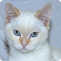 Adopt A Pet :: Gridley M - Sacramento, CA