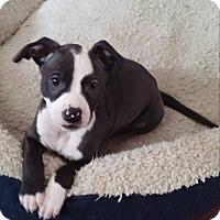 Adopt A Pet :: Jerry - Eastpointe, MI