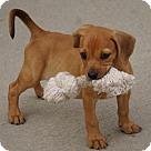 Adopt A Pet :: Ritz Cracker