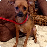 Adopt A Pet :: Solo - Santa Ana, CA