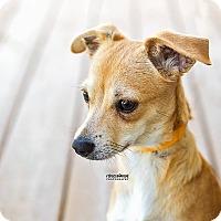 Adopt A Pet :: Grace - North Brunswick, NJ