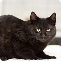 Adopt A Pet :: Khufu - Fountain Hills, AZ