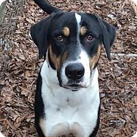 Adopt A Pet :: Clark - Manhasset, NY