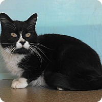 Adopt A Pet :: Boots - Larned, KS