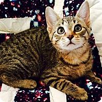 Adopt A Pet :: Aradia - Addison, IL