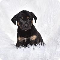 Adopt A Pet :: Becca - Groton, MA