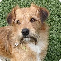 Adopt A Pet :: TEDDY - Hurricane, UT