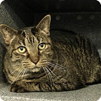 Adopt A Pet :: C-68793 Abbey **In Foster** - Westampton, NJ