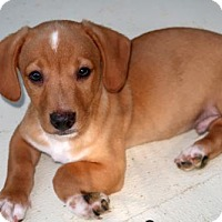 Adopt A Pet :: Fyn - Burbank, OH