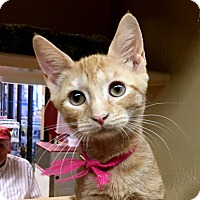 Adopt A Pet :: Tangela - Fairfax, VA