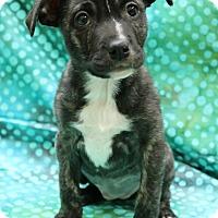 Adopt A Pet :: Merelynn - Hagerstown, MD